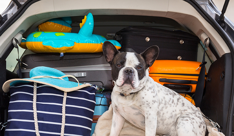 (image of dog in car with luggage)