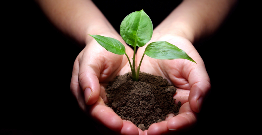 image of hands holding a plant growing in the dirt